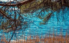 Картинка волны, лес, лето, вода, деревья, пейзаж, ветки, природа, блики, река, камыши, дерево, ветви, весна, сосна, …