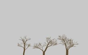 Картинка деревья, ветки, природа