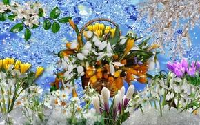 Картинка цветы, весна, Подснежник