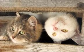 Картинка кошка, котенок, kitten, kitty, cats, забавный кот, funny cat