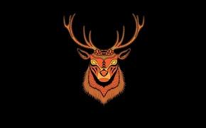 Картинка минимализм, голова, олень, рога, черный фон, deer