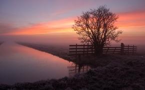 Картинка water, tree, fog, fence, sunrise, frost
