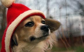 Картинка взгляд, друг, шапка