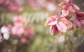 Картинка макро, блики, листва, ветка