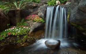 Обои цветы, сад, водопад, петунья, ручей, пальма, камни, каскад