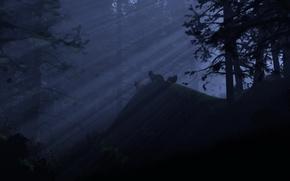 Картинка свет, ночь, Лес, волки