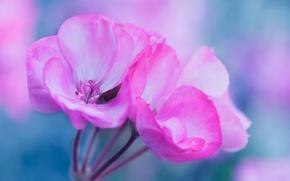Картинка цветы, растение, лепестки, соцветие