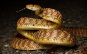 Картинка змея, кольца, профиль