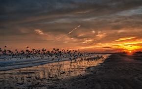 Картинка пляж, закат, океан, чайки, california