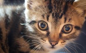 Картинка кошка, кот, полосатый