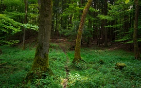 Картинка зелень, трава, деревья, green, Лес, grass, forest, роща, trees