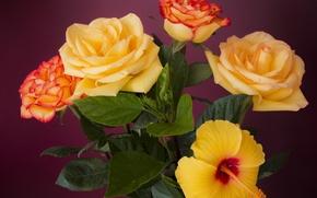 Обои розы, букет, лепестки, бутоны, гибискус