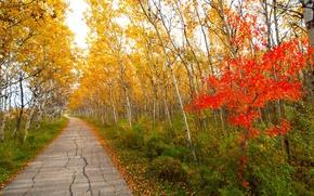 Обои осень, листья, деревья, парк, дорожка, багрянец