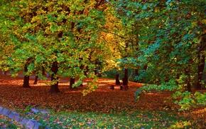 Картинка осень, деревья, парк, ветви, Nature, листопад, trees, park, autumn, leaves, fall