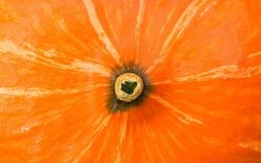 Обои Попа, Тыква, Оранжевая