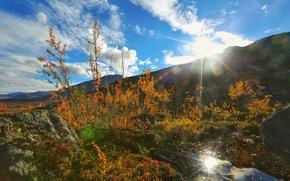 Обои лучи, горы, деревья, листья, растение, солнце, небо, трава, осень, камни, закат