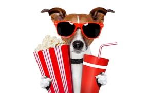 Картинка очки, Джек-рассел-терьер, напиток, попкорн, белый фон, стаканчики, юмор, трубочка