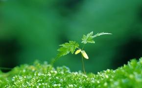 Картинка зеленый, растение, листочки