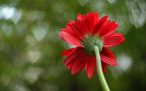 Картинка цветок, макро, красный, фон, лепестки, сердечки, macro