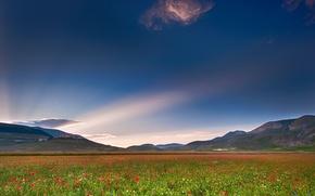 Картинка поле, небо, свет, маки, облако, Италия, Умбрия