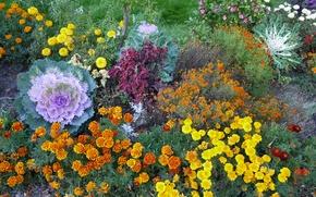 Картинка осень, цветы, природа, landscape, nature, flowers, autumn, view, fscenery