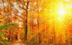 Картинка Природа, Осень, Деревья, Лес, Лучи Света, Времена Года