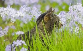 Обои кошак, трава, зеленый