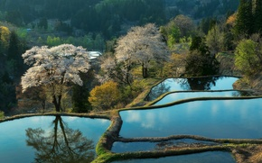 Картинка горы, природа, Азия, плантации