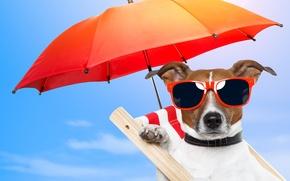 Картинка природа, отдых, собака, зонт, очки, стул, nature, dog, chair, glasses, umbrellas, rest