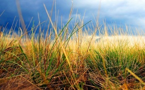 Картинка осень, небо, трава
