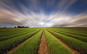 Картинка поле, небо, выдержка, лаванда
