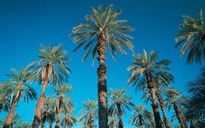Обои пальмы, небо, синий, 152