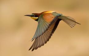 Картинка полет, птица, щурка