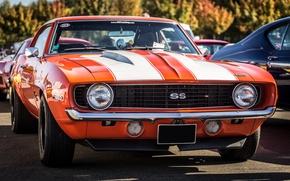 Обои chevrolet, camaro, ss, 350, передок, muscle car