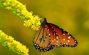 Картинка цветок, макро, бабочка, ветка, метелик