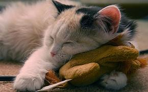 Обои радость, кошаки, сон