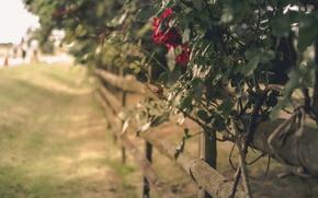 Картинка цветы, фон, забор