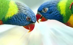 Картинка птицы, попугаи, разноцветные