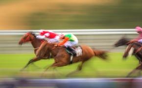 Обои фон, гонка, спорт, кони