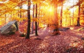 Картинка Природа, Осень, Деревья, Листья, Камни, Украина, Леса, Карпаты