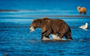 Картинка природа, река, рыба, медведь