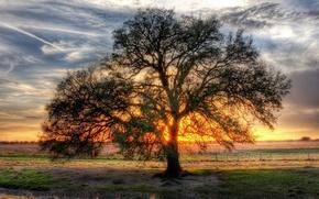 Обои дерево, солнца, ветвистое, просвет