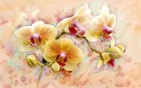 Картинка цветок, арт, формы, орхидеи, flower, orchid, цветочек, красотой., настолько, оригинальностью, сказочной, блещут