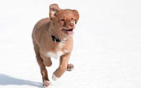 Картинка собака, бег, друг