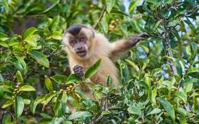 Картинка животные, природа, обезьяна, monkey, nature, animal