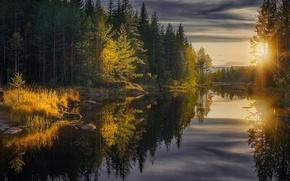 Обои лес, осень, деревья, Jorn Allan Pedersen, лучи солнца, отражение, река