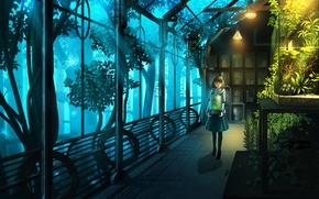 Картинка девушка, цветы, растения, аниме, арт, nauimusuka