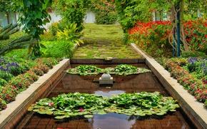 Картинка лето, вода, цветы, природа, растения, summer, Nature, water, park, flowers, garden
