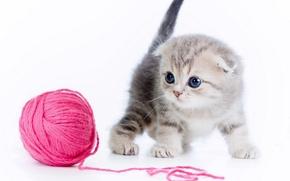 Картинка клубок, котёнок, нитки