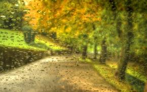 Картинка осень, лес, листья, капли, деревья, природа, парк, дождь, прогулка, forest, road, rain, trees, nature, park, …